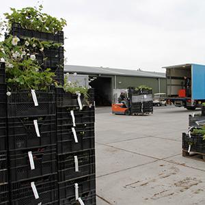 Pflanzenpalletten werden in den Lastwagen geladen