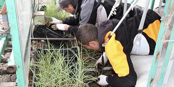 Zwei Mitarbeiter beim Pflanzen in einem Pflanzenkarren